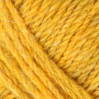 Scotch Broom 1160